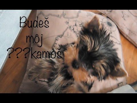 Vlog č. 107 - Budeš môj kamoš??? from YouTube · Duration:  23 minutes 15 seconds