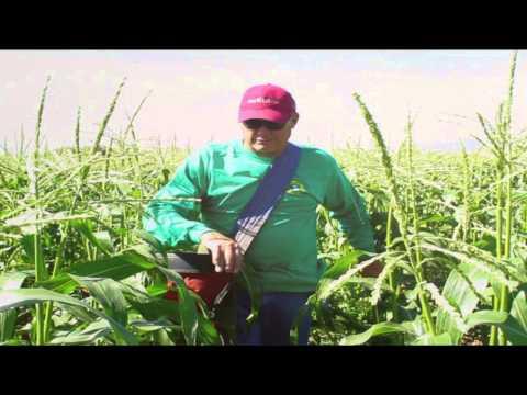 Celebrate Arizona Sweet Corn