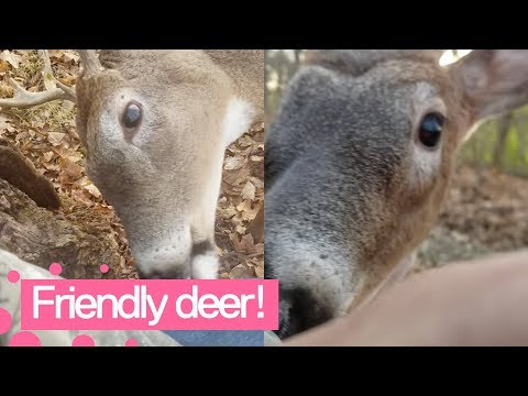 Friendly Deer Approaches Hunters – Amazing Moment!