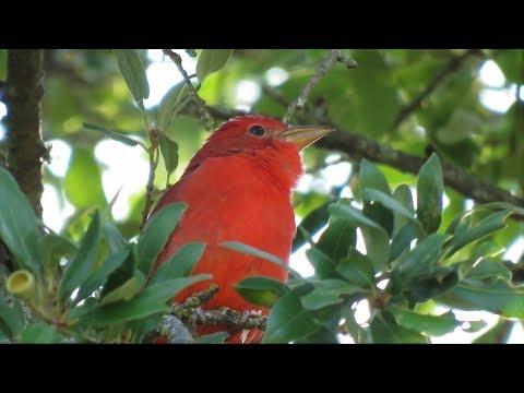 Paluxy River Wildlife 2017