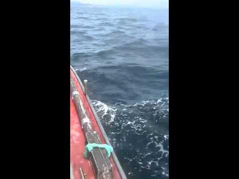 RIVEIRA - Avistan un tiburón peregrino en aguas de Corrubedo