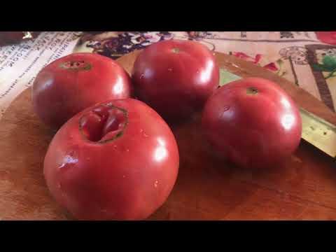 Семена томатов на 2019 / заказать семена томатов на 2019