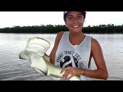 Marine Biology Internship -- Coral Reef and Shark Research -- College of Charleston