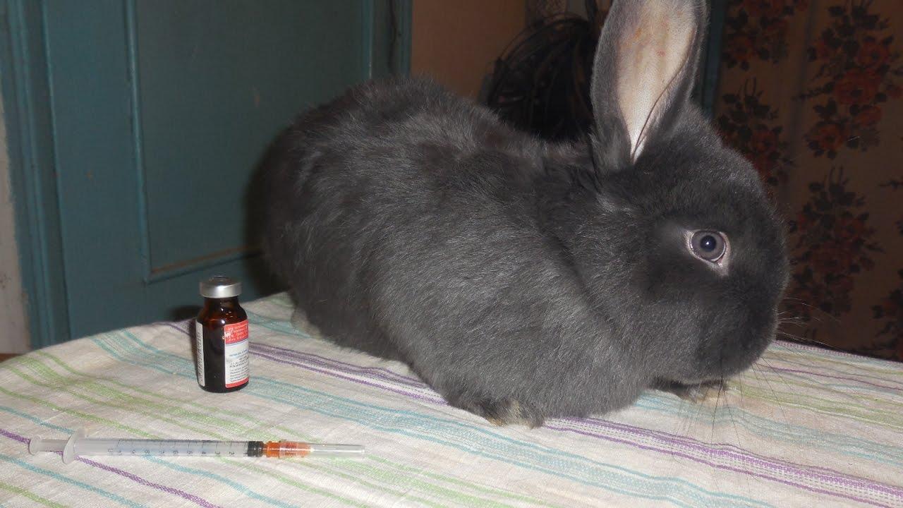 кашель у кроликов
