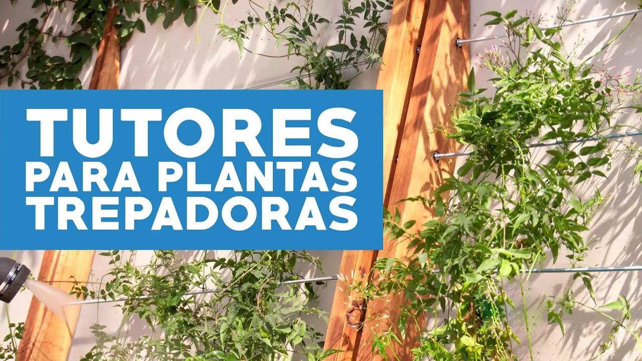 C mo hacer tutores para cubrir muros con plantas for Plantas trepadoras para muros