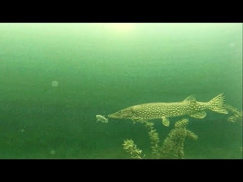 Ice Fishing EXTREME Cold For Hungry Pike