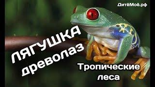 Лягушка-Древолаз. Энциклопедия для детей про животных. Тропики
