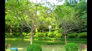 Городской парк в Шеньчжене (Китай)(Вполне обычный для китайцев парк для семейного отдыха. Здесь пускают воздушных змеев, занимаются тайчи..., 2015-05-06T08:53:06.000Z)