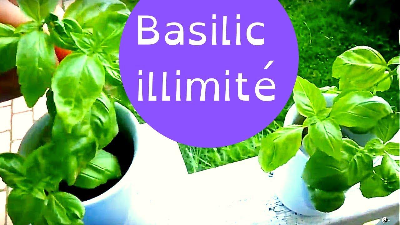 Faire Pousser Du Persil En Appartement comment faire pousser du #basilic illimité ??? en #balcon, à l'intérieur,  en #pot, en appartement