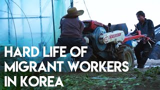 Migrant workers living in dire…