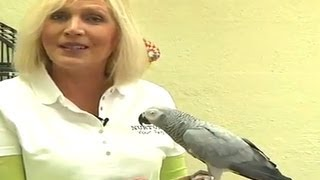 Teaching Parrots to Talk (Parrot Talking)