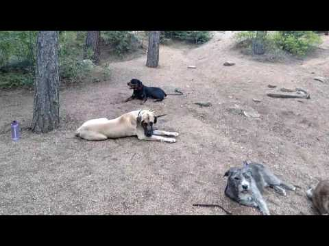 Hike with 6 dogs in the mountains
