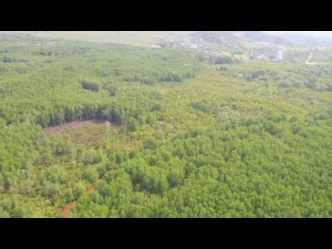 www.treasure-images.com - Sulaman Wetland Sanctuary - Sabah - Malaysia - MANDARIN VERSION