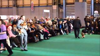 Crufts 2011 Cavalier King Charles Spaniel Best Of Breed Part 3/3