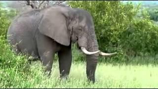 Słoń afrykański - krajobraz Afryki ,,Safari