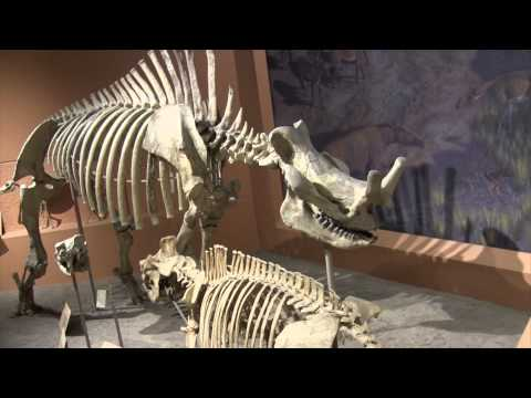 Smithsonian National Museum of Natural History - Washington D.C. - Walkthrough