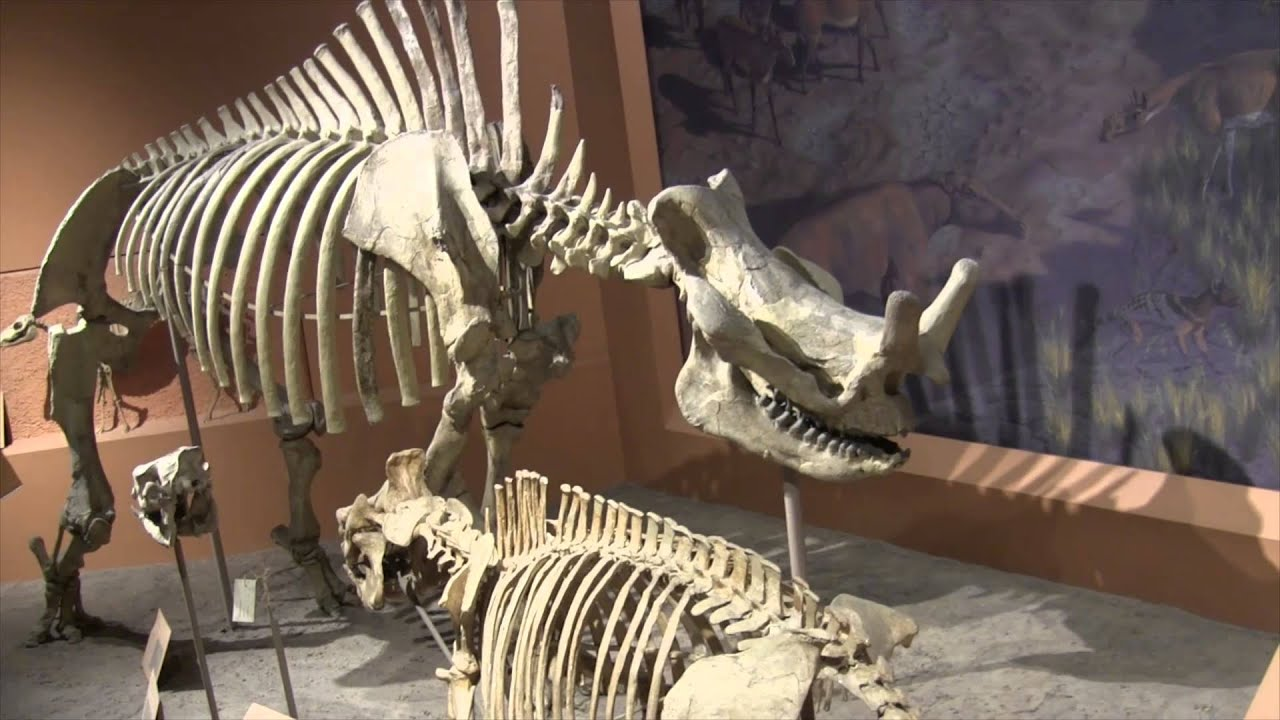 Dinosaurs At Smithsonian Museum Of Natural History