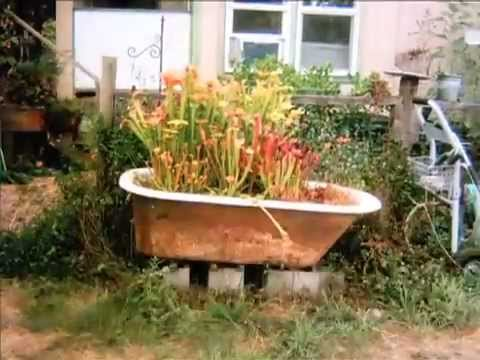 Vegetable Garden Bathtub