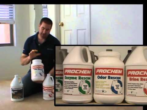 Tratamiento de orines en alfombras youtube - Quitar olor a pis de gato ...