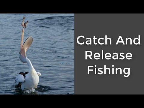Catch And Release Fishing Gifts For Fishermen