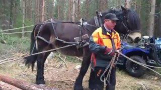 Skogsdag på Backnilsbo gård (filmat med iPhone 6+)