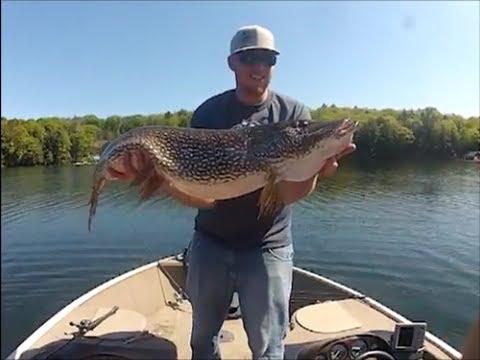Big Pike Regurgitates Lake Trout