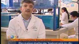 GLIFOSATO - EFECTOS EN PECES