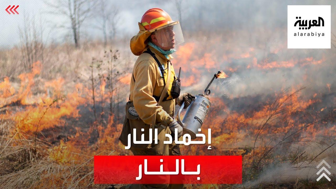 إخماد النار بالنار!.. طريقة غريبة لمكافحة حرائق الغابات