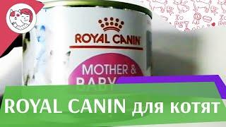 RoyalCanin Kitten на ilikepet