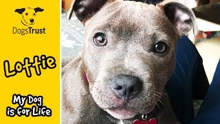 A year in the life of Lottie | #MyDogIsForLife | Dogs Trust Manchester