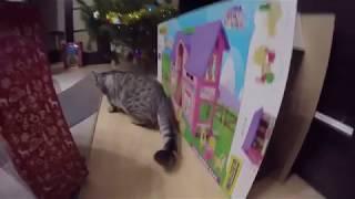 Друг нашей Кошки Хлои - Кот Вискас 😻 Котики 🐱 Видео про котов и кошек 2018