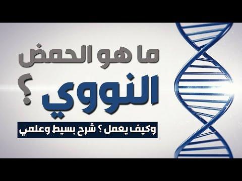 ما هو الحمض النووي DNA؟ وكيف يعمل ؟ شرح بسيط وعلمي