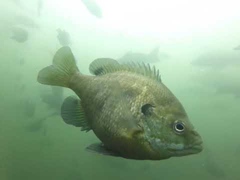 Under Water At Fish Trap Lake