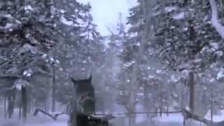 нападение тигра кто знает из какого фильма ролик
