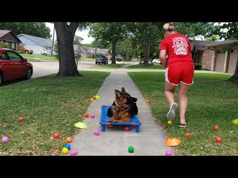 Houston Area Dog Trainers | Off Leash K9 Training of Houston TX