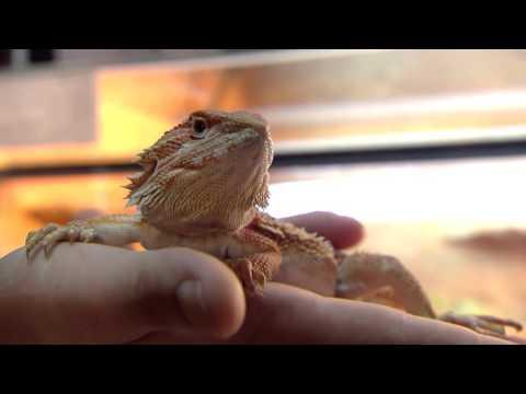 VIS MA VIE: Les NAC -animaux de compagnie #Episode1