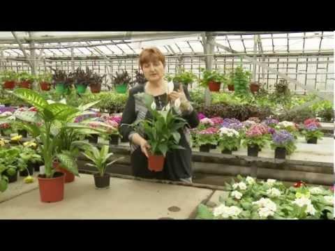 Кустовые растения. Цветы в доме. Выпуск 7