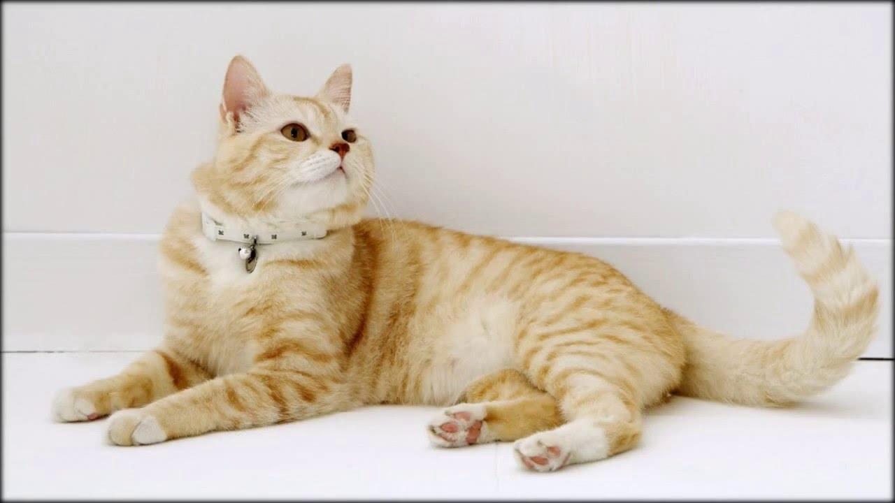 8 апр 2017. Феромон для кошек feliway® (секрет кошачьего счастья) feliway® феромон эффективный и безопасный способ восстановить.