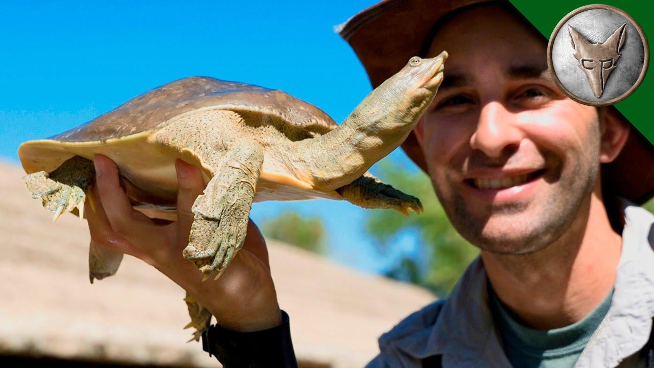 bizarre-desert-turtle
