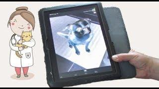 Проверяем приложения- собачий переводчик, рентген...