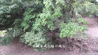 今回の中期古墳は国内最大の規模を誇る前方後円墳、仁徳天皇陵つまり大...