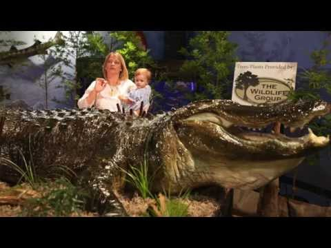 World Record Stokes alligator unveiled in Montgomery, Ala.