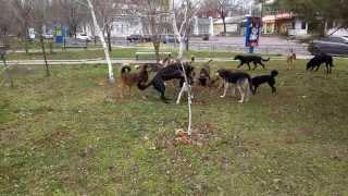 Злые Собаки в Бердянске на проспекте Ленина. Парк Пушкина