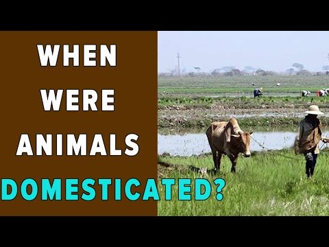 WHEN WERE ANIMALS DOMESTICATED?