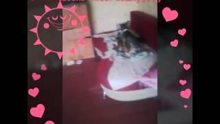 кошка и сабака любят друг друга