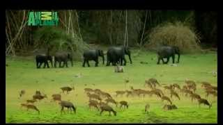 Animal Planet Yeh Mera India Anthem