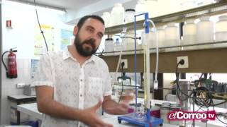 Bacterias y algas para emitir luz sin consumir electricidad