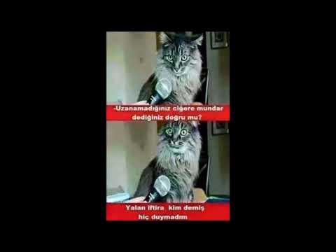 en komik kedi replikleri