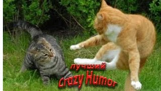 Коты дерутся ( озвучка из фильма)