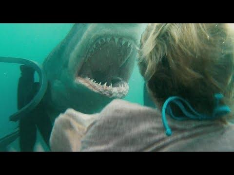 Акула в Азовском море на пляже!!!